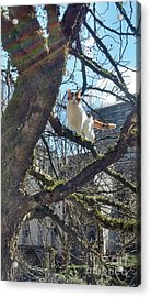 Acrylic Print featuring the photograph Tree Climber by Bill Thomson