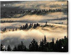 Trees In The Clouds Acrylic Print