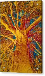 Tree Crown Acrylic Print by Frank Tschakert