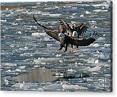 Tree Eagles On Ice Acrylic Print