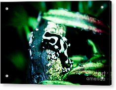 Tree Frog Acrylic Print by Brenton Woodruff