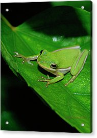 Tree Frog On Hibiscus Leaf Acrylic Print by DigiArt Diaries by Vicky B Fuller