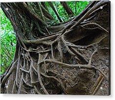 Tree From Manoa Falls Acrylic Print by Elizabeth Hoskinson