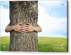 Tree Hugger 2 Acrylic Print by Brandon Tabiolo - Printscapes