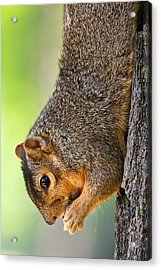 Tree Hugger Acrylic Print by James Marvin Phelps