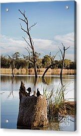 Acrylic Print featuring the photograph Tree Image by Douglas Barnard