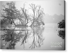 Tree In A Lake Acrylic Print by Pravine Chester