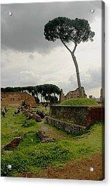 Tree In Ancient Rome Landscape Acrylic Print by Joseph Cossolini