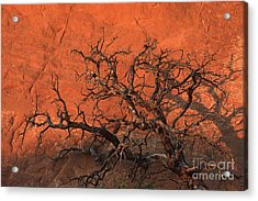Tree In Arches Acrylic Print by Stan and Anne Foster