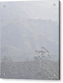 Tree In Early Morning Mist Acrylic Print by Linda Brody