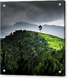Tree In Kilimanjaro Acrylic Print