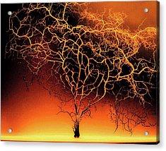 Tree In Light Acrylic Print