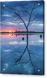 Tree In Silhouette Acrylic Print by Jae Mishra
