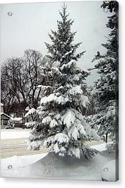 Tree In Snow Acrylic Print