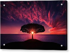 Tree In Sunset Acrylic Print by Bess Hamiti