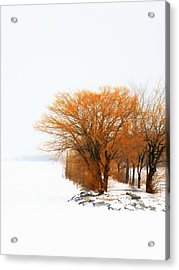 Tree In The Winter Acrylic Print