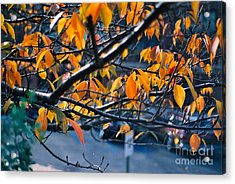 Tree In View Acrylic Print by Simonne Mina