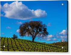 Tree In Vineyard With Clouds Acrylic Print by Garry Gay