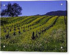 Tree  In Vineyards Acrylic Print