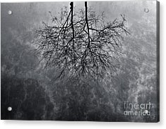 Tree In Water Acrylic Print