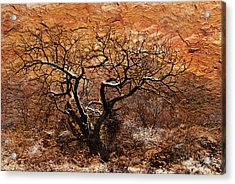 Acrylic Print featuring the photograph Tree In Winter by Barbara Manis