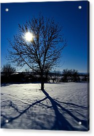 Tree Into Sun On A Winter Snowy Afternoon Acrylic Print