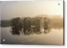 Tree Islands Acrylic Print