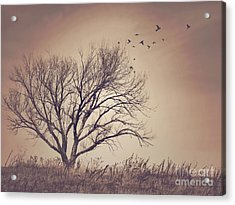 Tree Acrylic Print by Juli Scalzi
