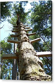 Tree Ladder Acrylic Print by Gene Ritchhart