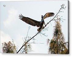 Acrylic Print featuring the photograph Tree Landing by David Buhler