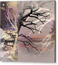 Tree Layers 8 Acrylic Print by Dorothy Berry-Lound