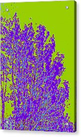 Tree Leaves D4 Acrylic Print by Modified Image