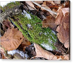 Acrylic Print featuring the photograph Tree Lichen by Scott Kingery