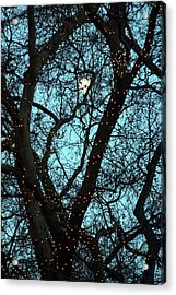 Tree Light Acrylic Print by Jez C Self
