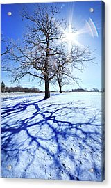 Acrylic Print featuring the photograph Tree Light by Phil Koch