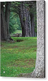 Tree Line Acrylic Print by Eric Liller
