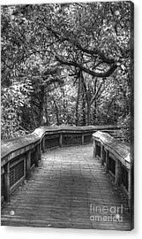 Tree Line Memories Acrylic Print