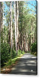 Tree Lined Mountain Road Acrylic Print