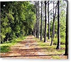 Tree Lined Path Acrylic Print