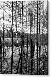 Tree Lines Acrylic Print by Dmytro Korol