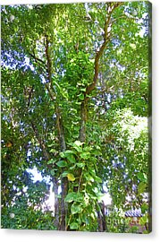 Acrylic Print featuring the photograph Tree M1 by Francesca Mackenney