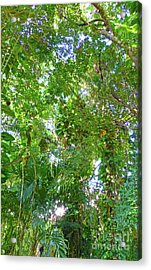 Acrylic Print featuring the photograph Tree M2 by Francesca Mackenney