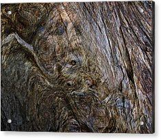 Acrylic Print featuring the photograph Tree Memories # 19 by Ed Hall