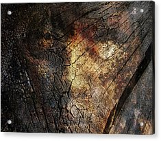Acrylic Print featuring the photograph Tree Memories # 21 by Ed Hall