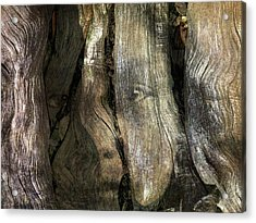 Acrylic Print featuring the photograph Tree Memories # 24 by Ed Hall