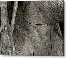 Acrylic Print featuring the photograph Tree Memories # 26 by Ed Hall