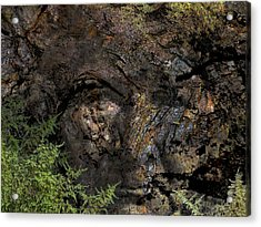 Acrylic Print featuring the photograph Tree Memories # 27 by Ed Hall