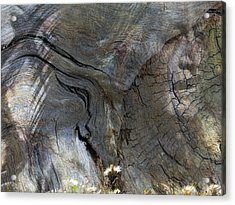 Acrylic Print featuring the photograph Tree Memories # 28 by Ed Hall