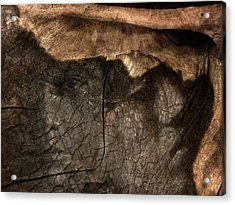Acrylic Print featuring the photograph Tree Memories # 29 by Ed Hall