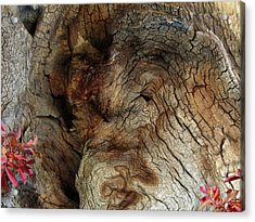 Acrylic Print featuring the photograph Tree Memories # 34 by Ed Hall
